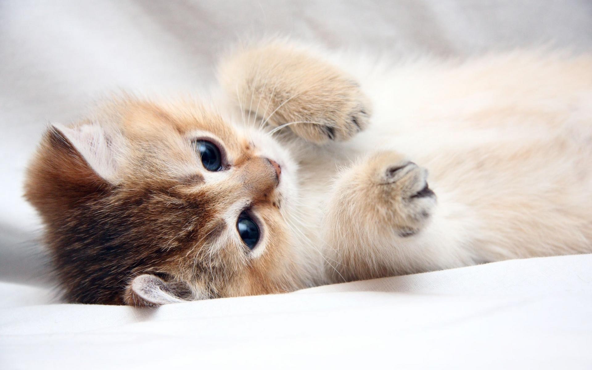 живые картинки для рабочего стола кошки