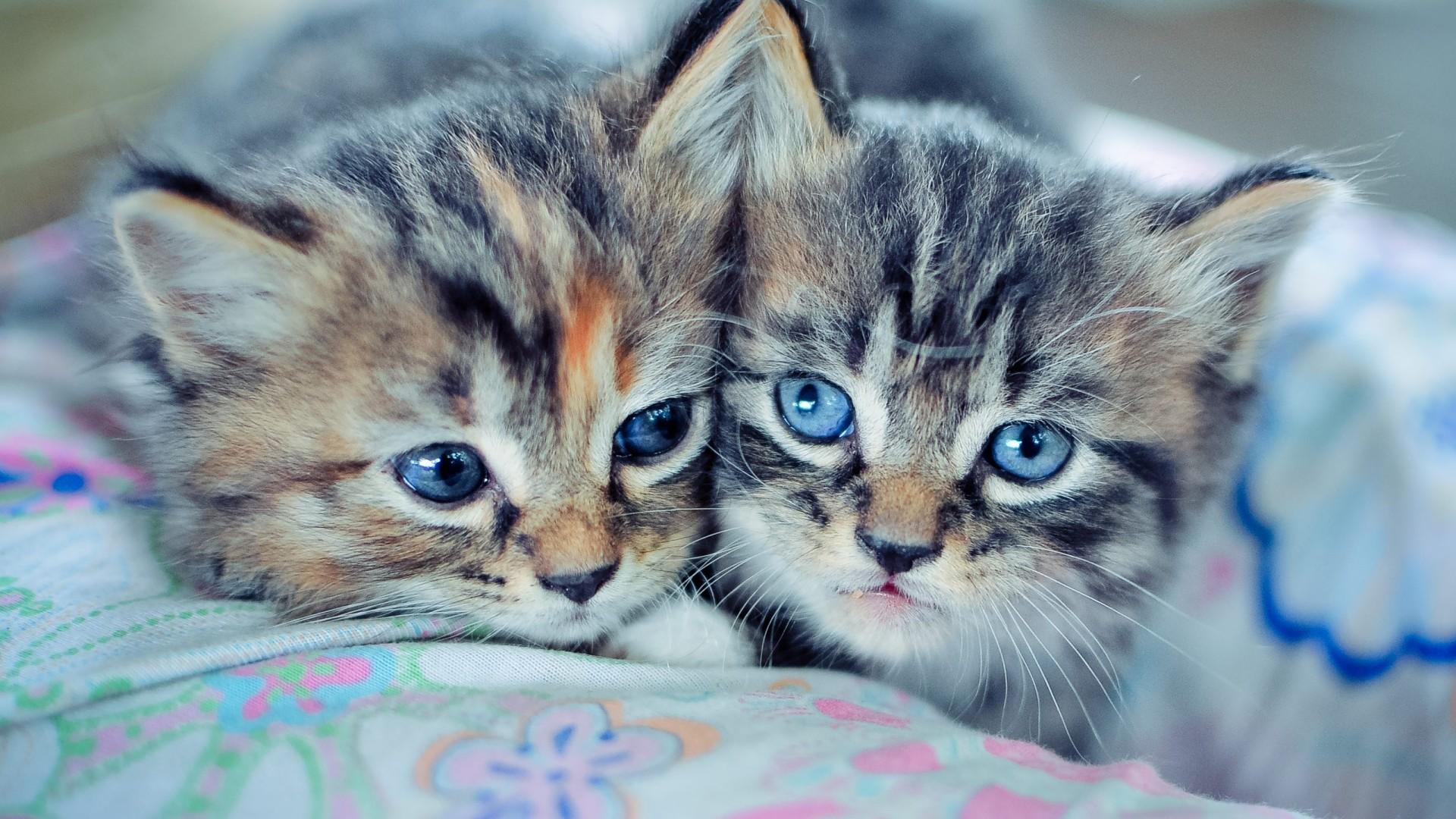 Обои на телефон на рабочий стол полосатые котята