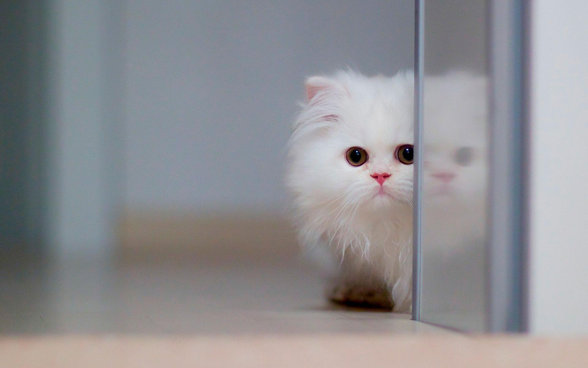 картинки светлых котят вовсю