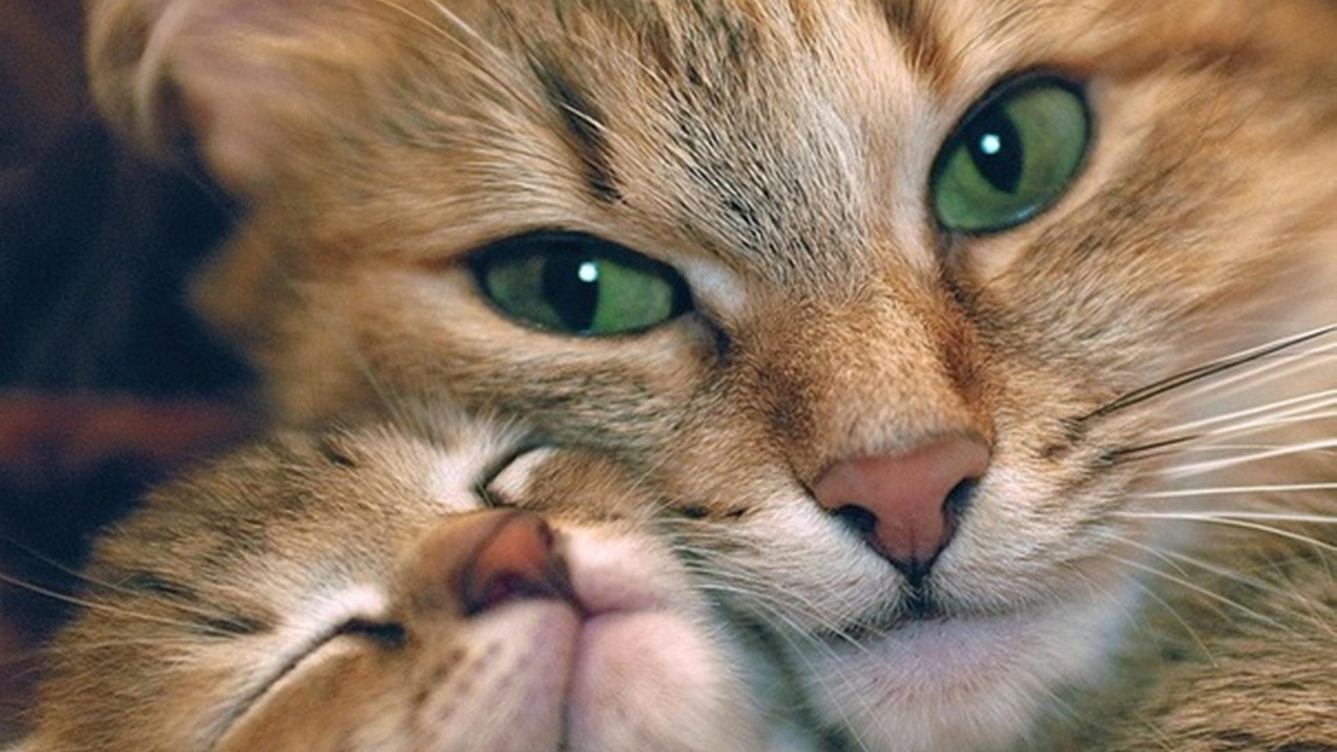 баллон кошки обои на смартфон этом