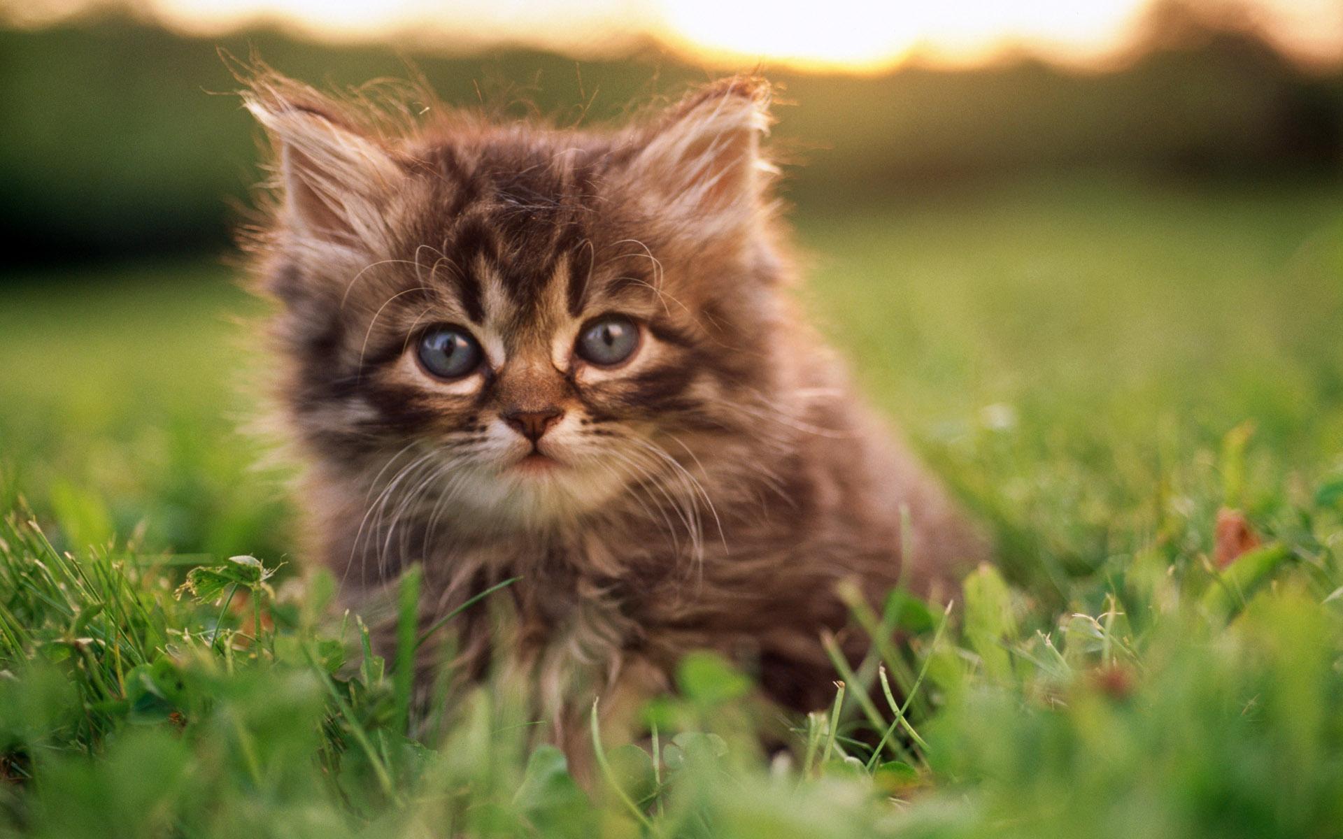 Картинки с котятами на робочий стол