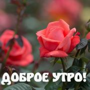 Картинки на Андроид Доброе утро   милые и приятные (8)
