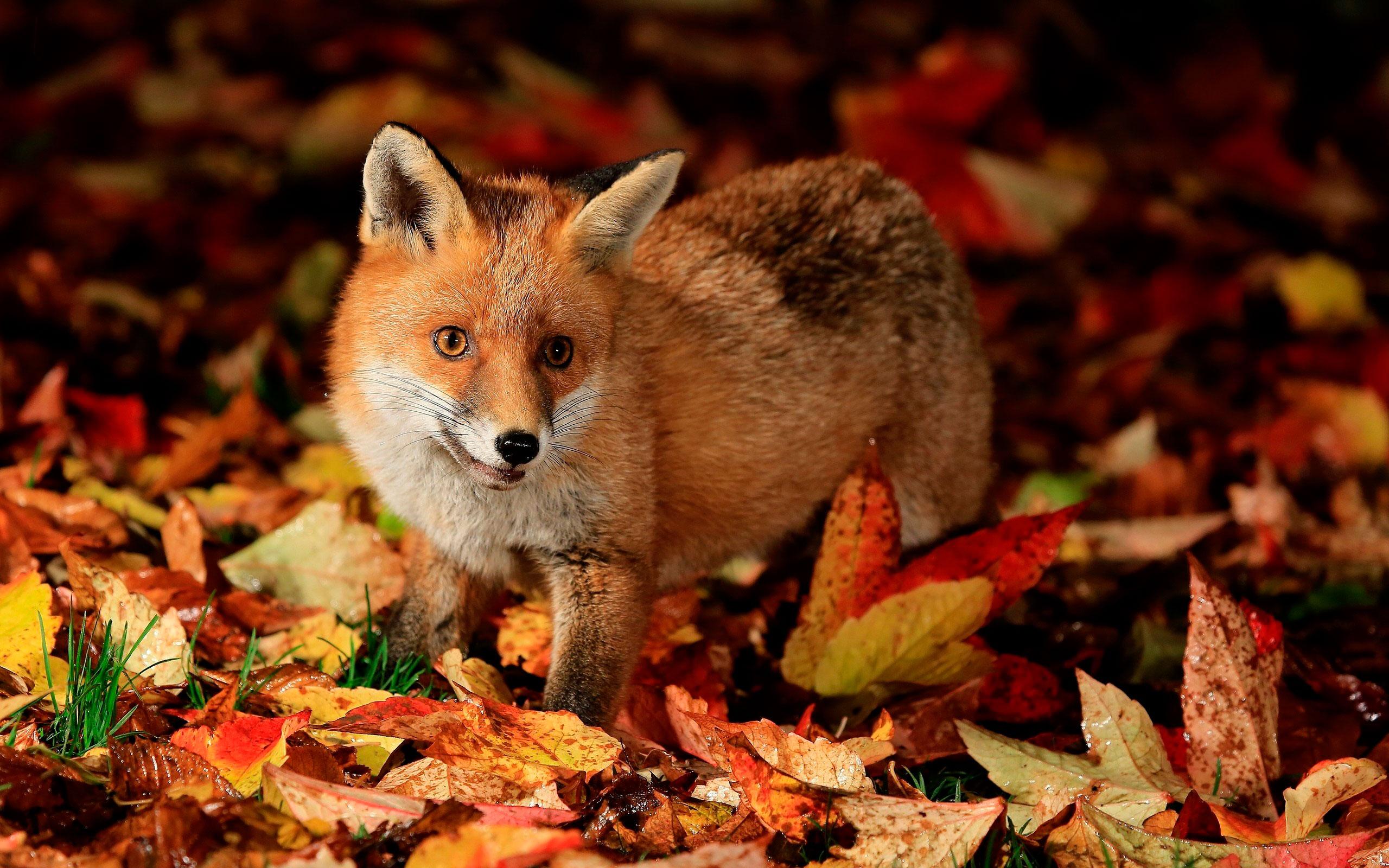 Осень с животными обои на рабочий стол