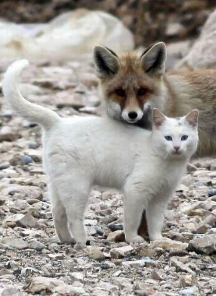 Красивые картинки и фото природы, животных подборка (10)
