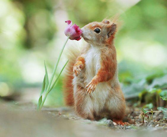 Красивые картинки и фото природы, животных подборка (11)