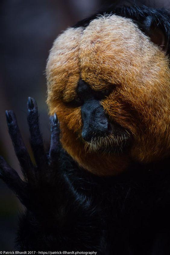 Красивые картинки и фото природы, животных подборка (12)