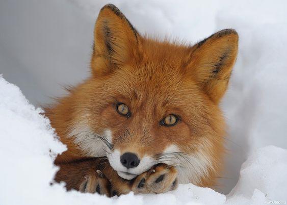 Красивые картинки и фото природы, животных подборка (15)