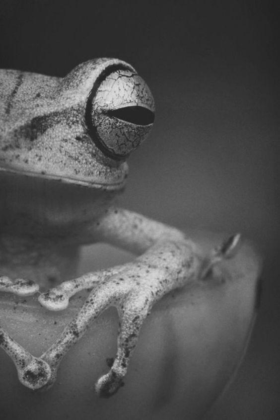 Красивые картинки и фото природы, животных подборка (2)