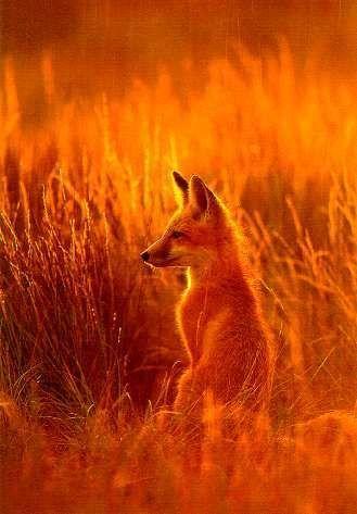 Красивые картинки и фото природы, животных подборка (20)