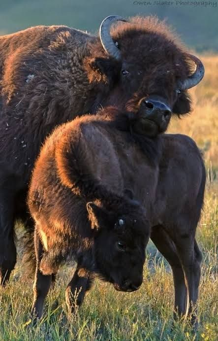 Красивые картинки и фото природы, животных подборка (4)