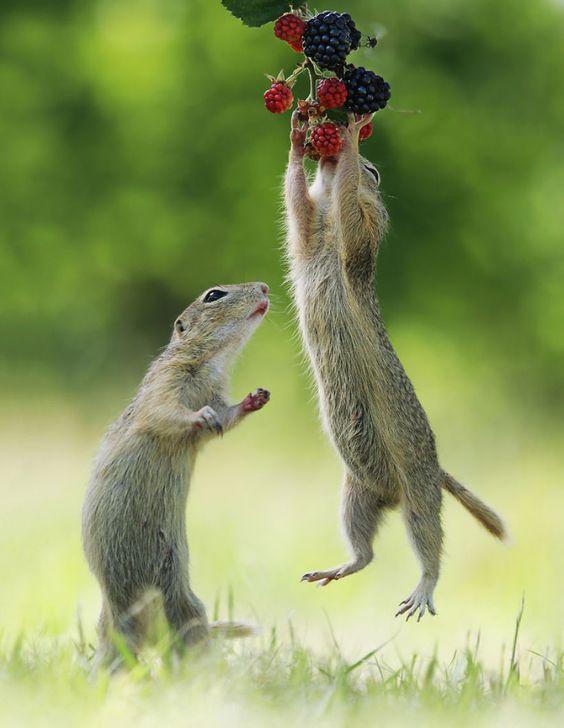 Красивые картинки и фото природы, животных подборка (5)