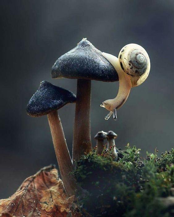 Красивые картинки и фото природы, животных подборка (6)
