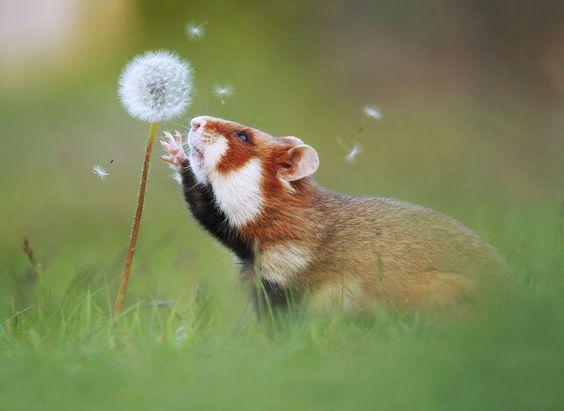 Красивые картинки и фото природы, животных подборка (7)