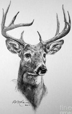 Красивые рисунки и изображения Оленя   подборка 25 картинок (13)