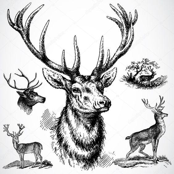 Красивые рисунки и изображения Оленя   подборка 25 картинок (14)