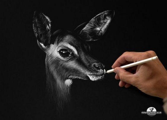 Красивые рисунки и изображения Оленя   подборка 25 картинок (16)