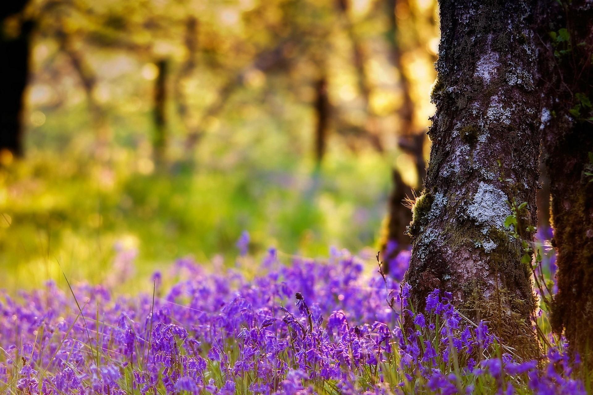 Красивые фото с природой в хорошем качестве   подборка (101)