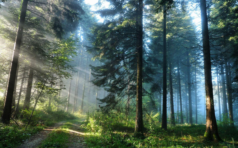 Красивые фото с природой в хорошем качестве   подборка (105)