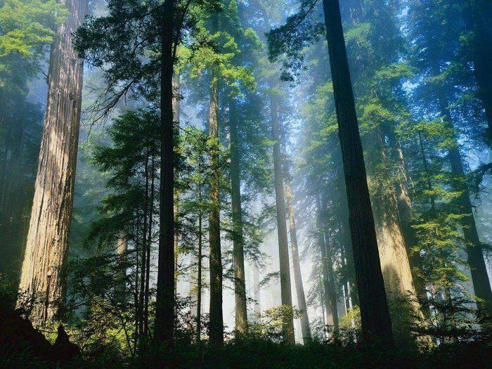 Красивые фото с природой в хорошем качестве   подборка (108)