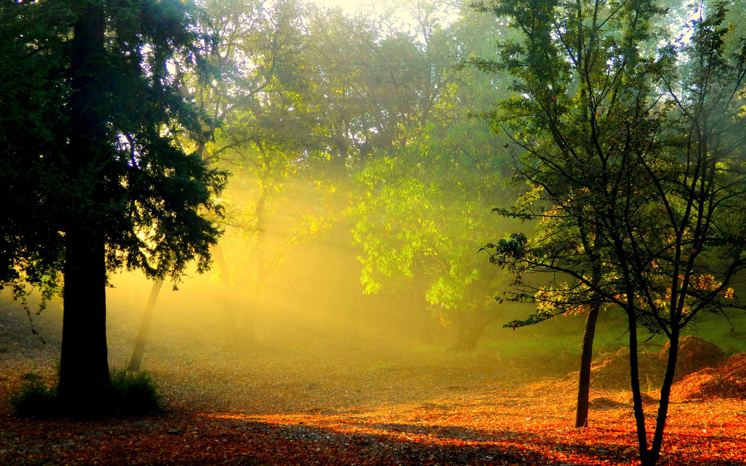Красивые фото с природой в хорошем качестве   подборка (81)