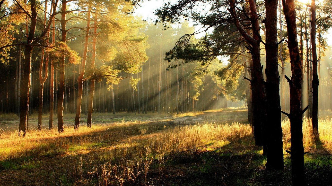 Красивые фото с природой в хорошем качестве   подборка (84)