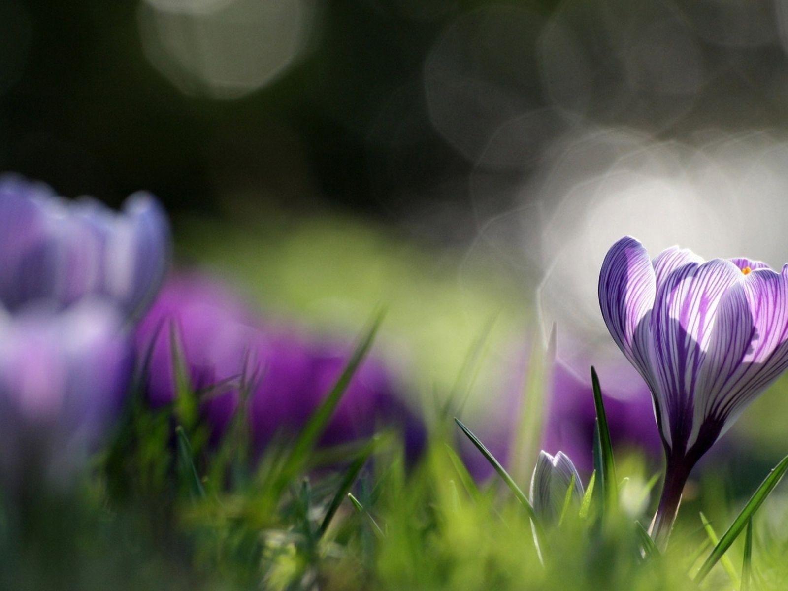 Красивые фото с природой в хорошем качестве   подборка (99)