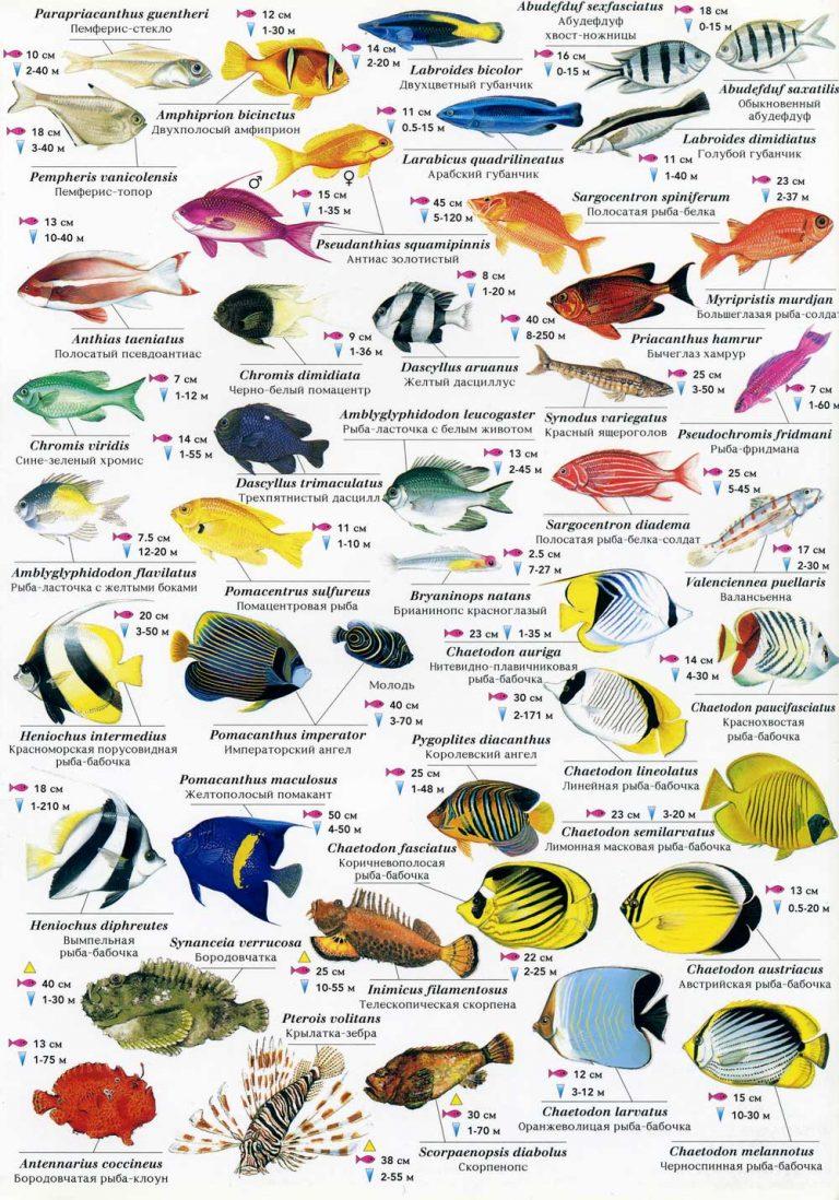 когда виды рыб с названиями и картинками абсолютное большинство