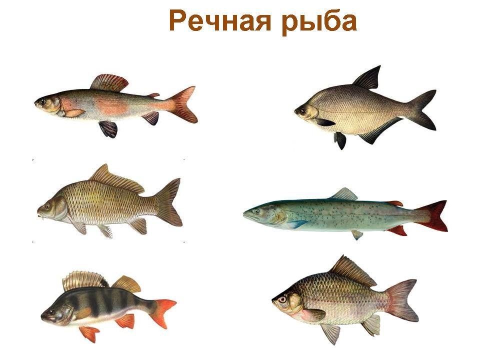 Рыбы фото и название для детей