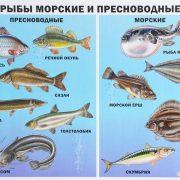 Морские рыбы   фото с названиями для детей (2)