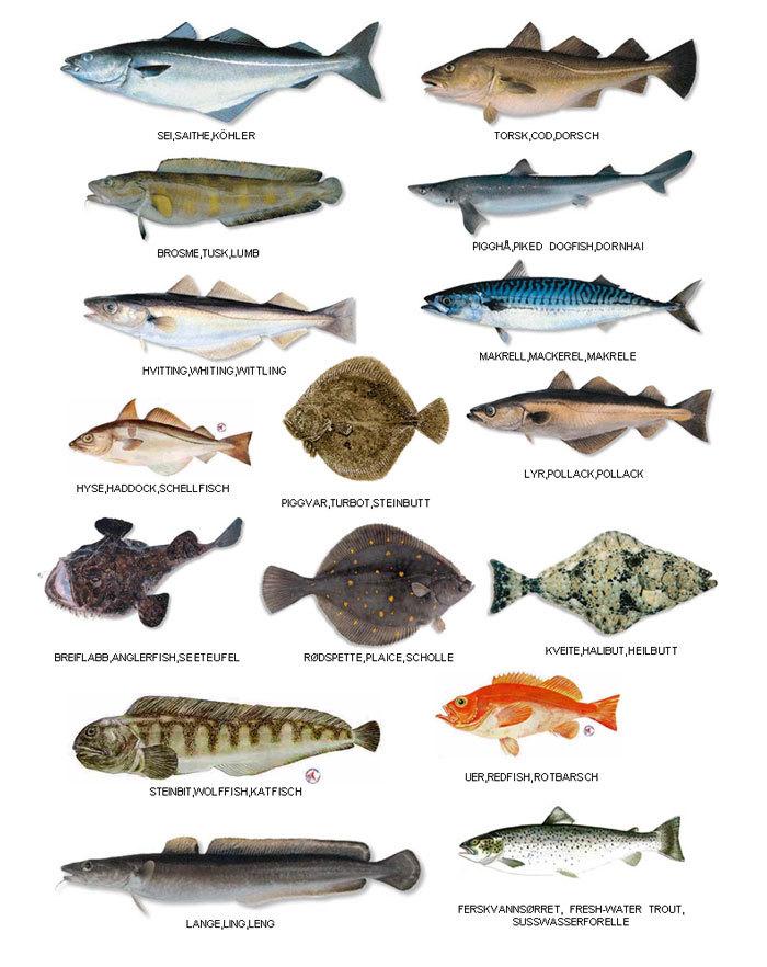 Рыба в самарской области фото и название съедобные