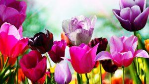 Обои для рабочего стола Весна   подборка картинок (11)