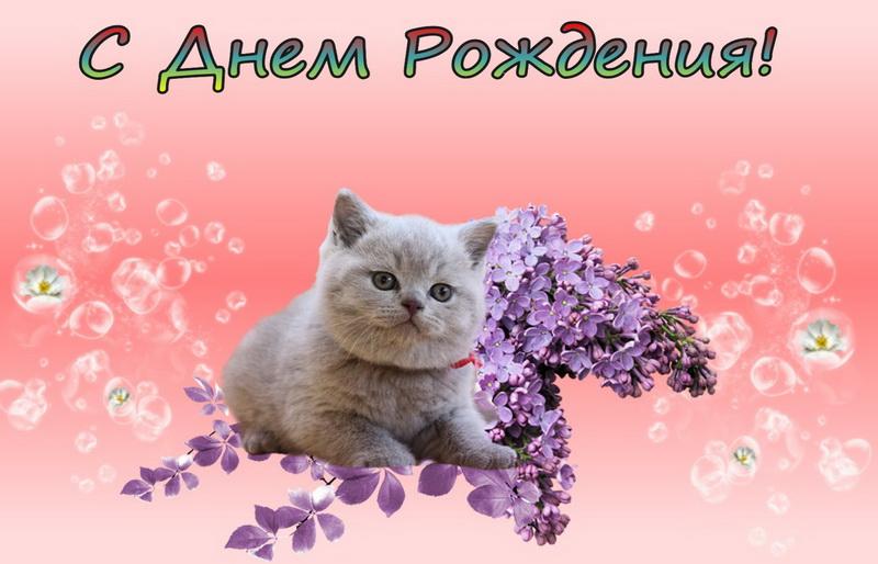 Картинки с котами поздравления с днем рождения