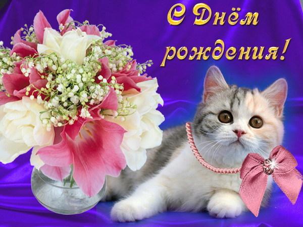 Приколы, картинка с днем рождения кот с цветами