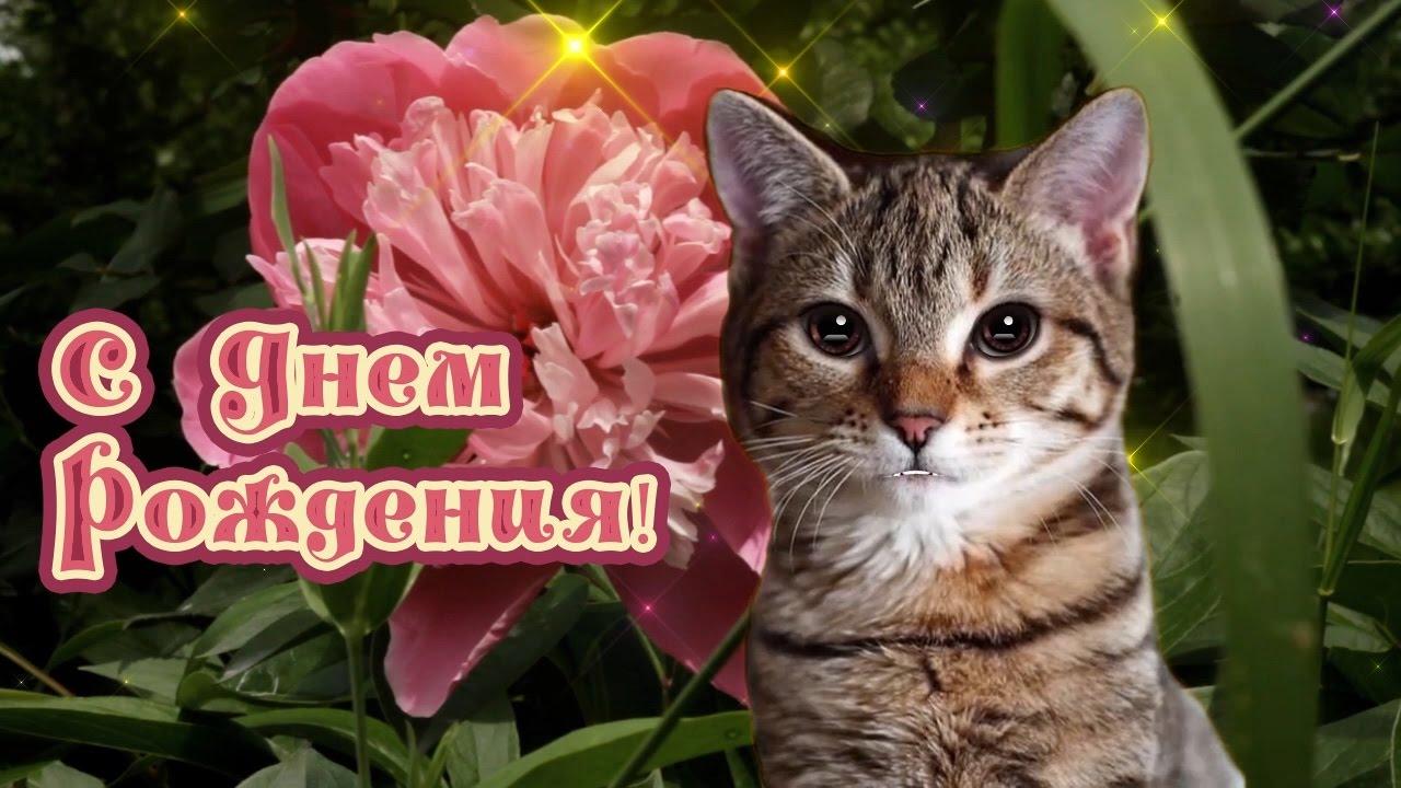 Поздравление с днем рождения от кота картинки, открыток москве картинка