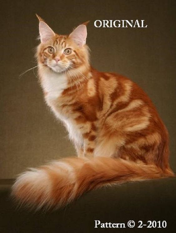 Породы кошек с описанием, названием и фотографиями подборка картинок (1)
