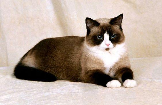 Породы кошек с описанием, названием и фотографиями подборка картинок (11)