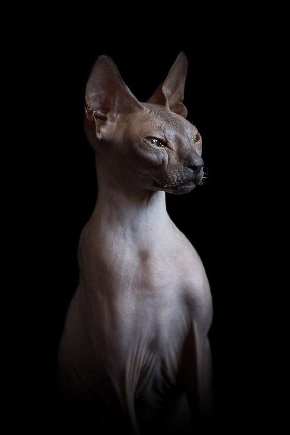 Породы кошек с описанием, названием и фотографиями подборка картинок (14)