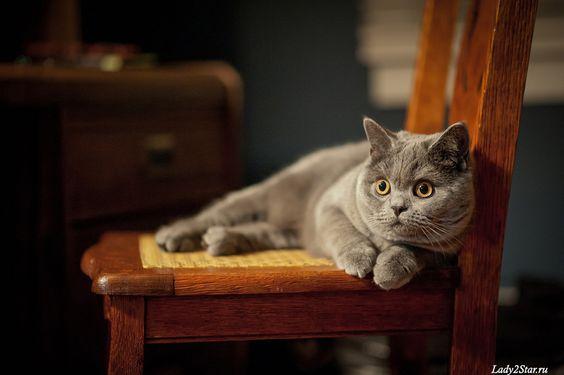 Породы кошек с описанием, названием и фотографиями подборка картинок (17)