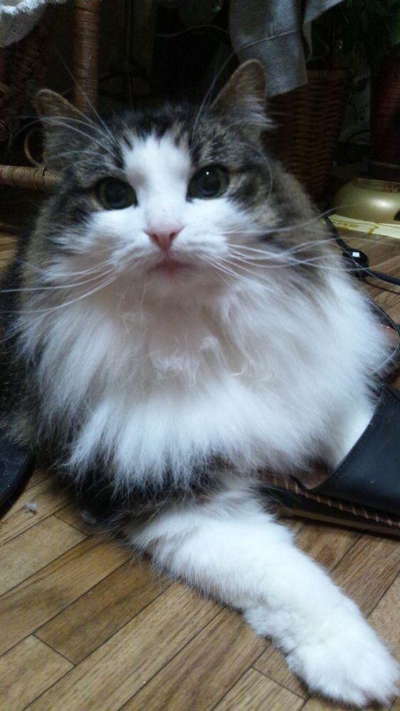Породы кошек с описанием, названием и фотографиями подборка картинок (2)
