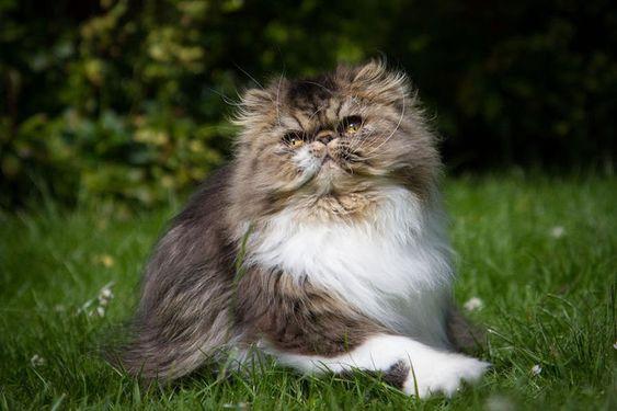 Породы кошек с описанием, названием и фотографиями подборка картинок (21)