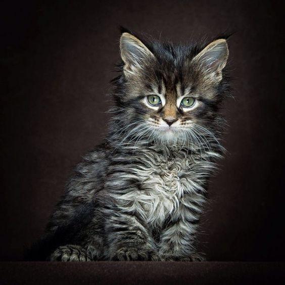 Породы кошек с описанием, названием и фотографиями подборка картинок (24)