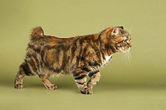 Породы кошек с описанием, названием и фотографиями подборка картинок (3)