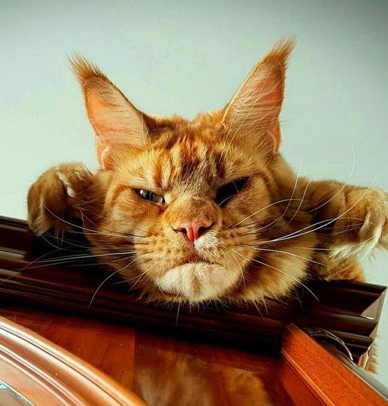 Породы кошек с описанием, названием и фотографиями подборка картинок (5)