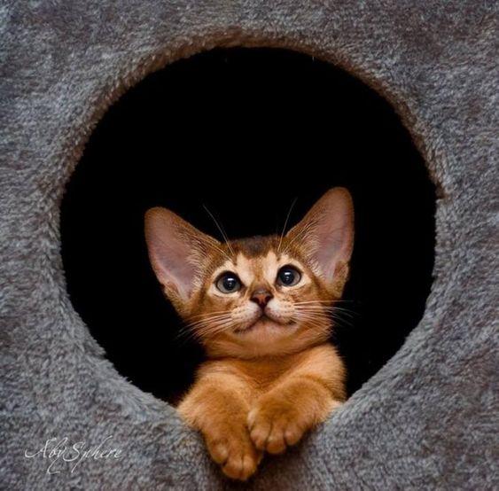 Породы кошек с описанием, названием и фотографиями подборка картинок (9)