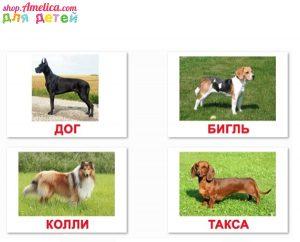Породы собак для детей с фотографиями и названиями   подборка (11)