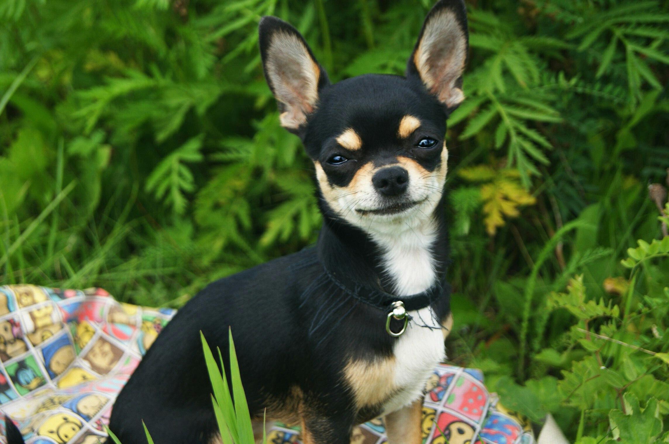 собаки маленьких пород и картинка и название нашей статье