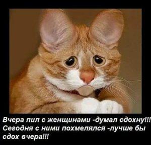 Прикольные фото с надписями смешные до слез   смешная подборка (18 картинок) (12)