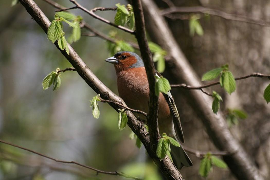 птицы тульской области фото с названиями летом