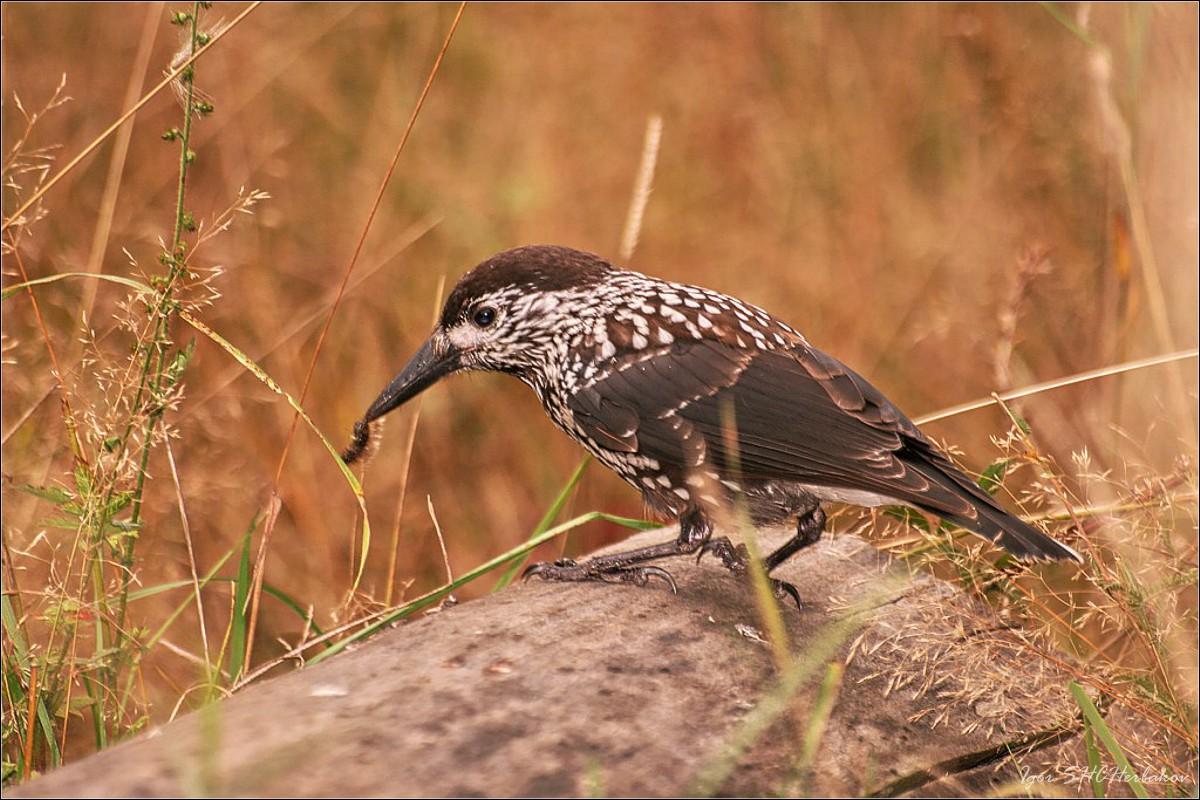 птицы смоленской области фото с названиями