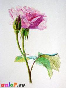Рисунки цветными карандашами   интересно (25 картинок) (13)